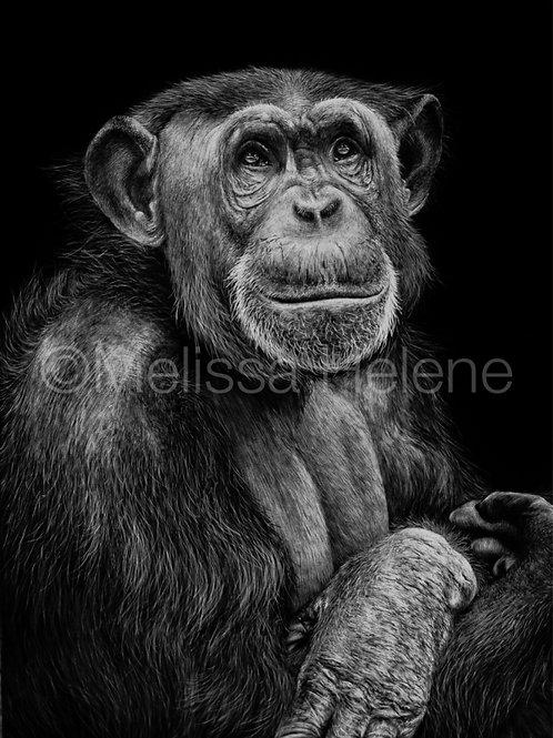 "Chimpanzee | Original | 7""x5"""