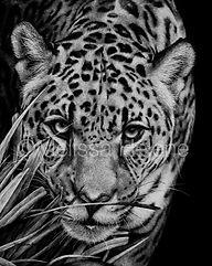 Jaguar 13 (wm) (1).jpg
