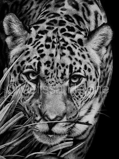 "Jaguar | Original | 10""x8"""