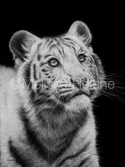 "White Tiger | Original | 12""x9"""