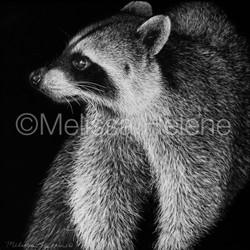 Raccoon 4 (wm)