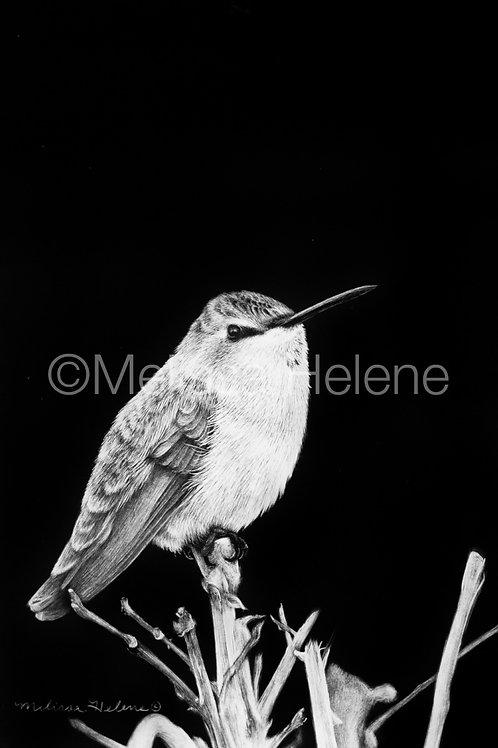 "Hummingbird   Original   6""x4"""