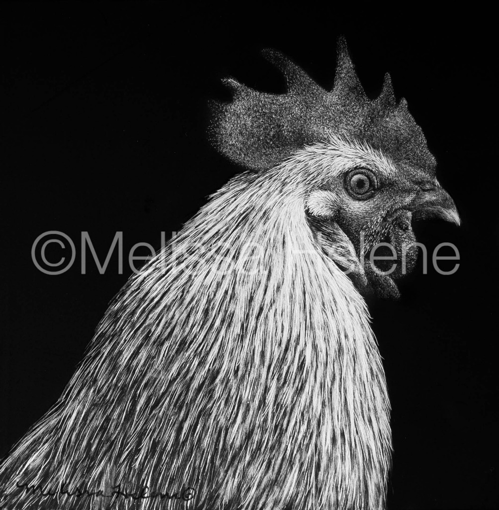 Bird - Chicken 5 (wm)