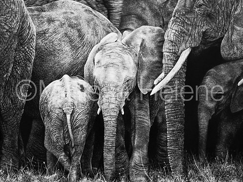 Herd of Elephants | Reproduction