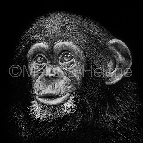 "Chimpanzee Baby | Original | 5""x5"""