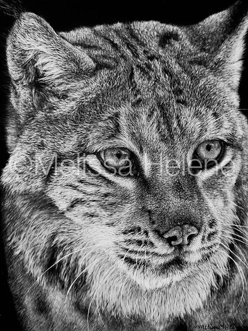 Lynx | Reproduction