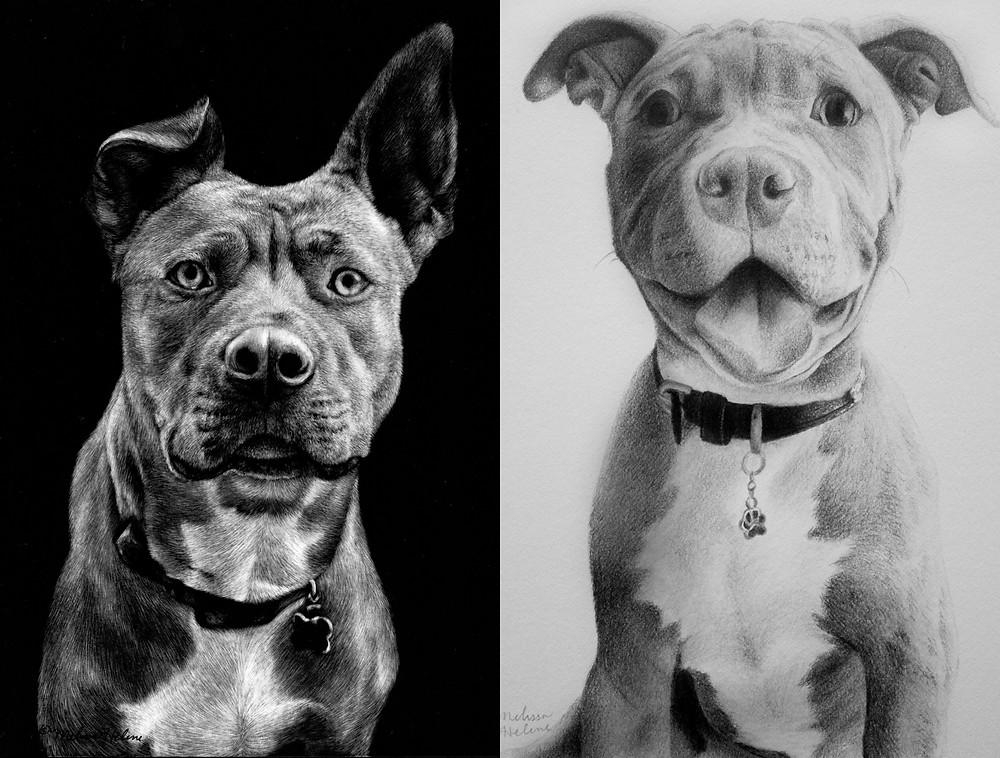 Pitbull collage.jpg