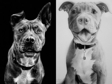 Pitbulls | Misunderstood Animals