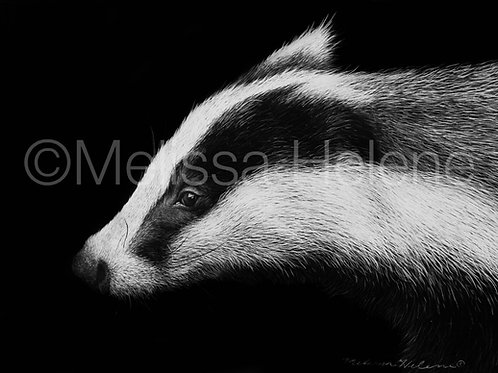 Badger | Reproduction