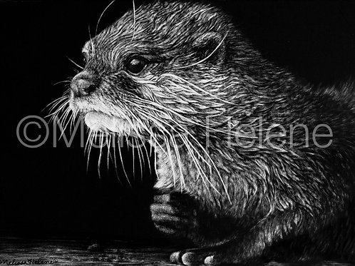 Otter 02 | Reproduction
