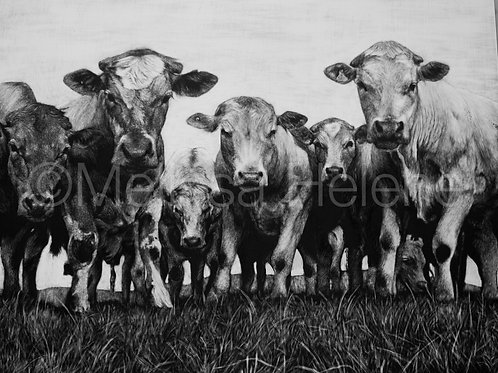 Cows in the Field | Reproduction