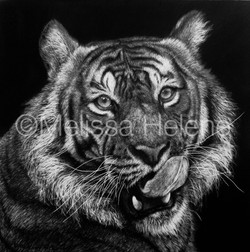 Tiger 2 (wm)