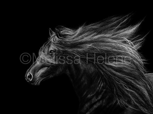 Running Wild - Horse | Reproduction
