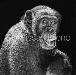 Chimpanzee 2 (wm)