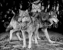 Wolf Pack 8 (wm)