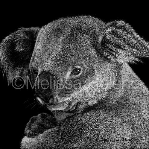 Koala | Reproduction