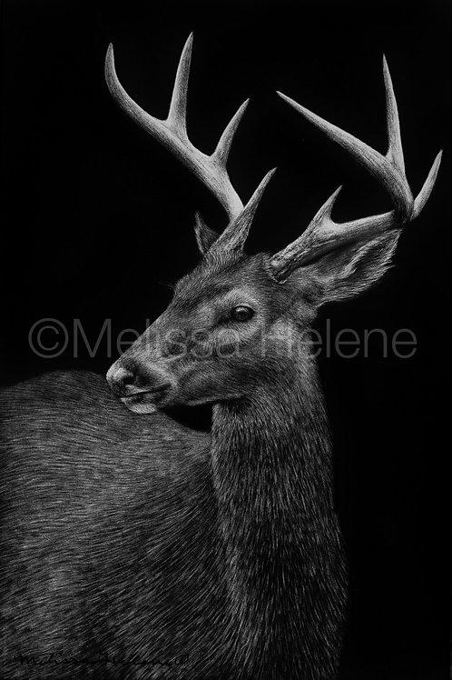 "White-Tailed Deer | Original | 6""x4"""