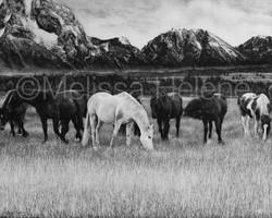 Horses 2 (wm)