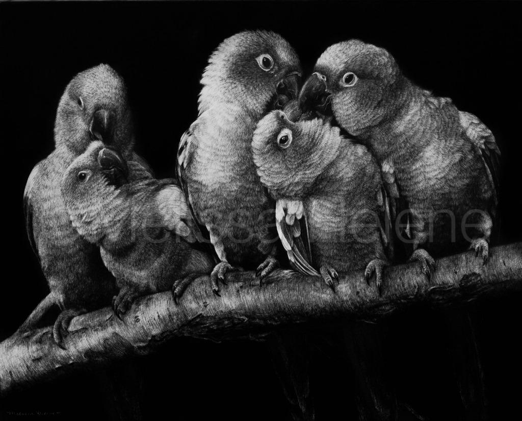 Pandemonium of Parakeets