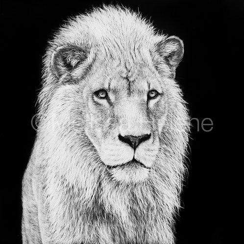 "African Lion | Original | 4""x4"""