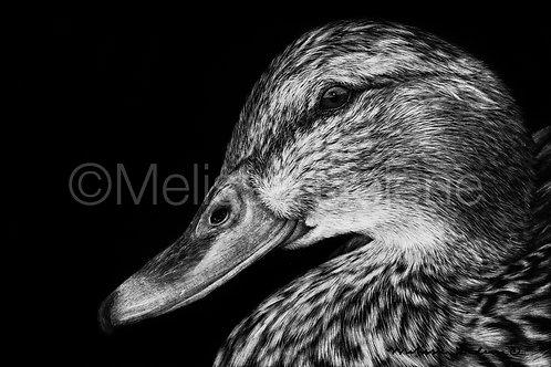 "Duck | Original | 4""x6"""