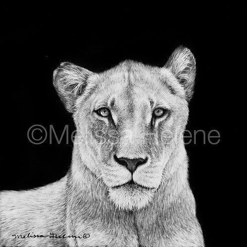 "African Lioness   Original   4""x4"""