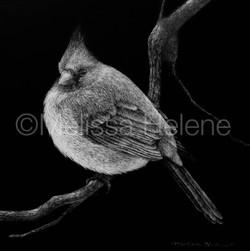 Bird - Cardinal 4 (wm)