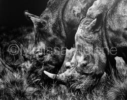 Rhinoceros'