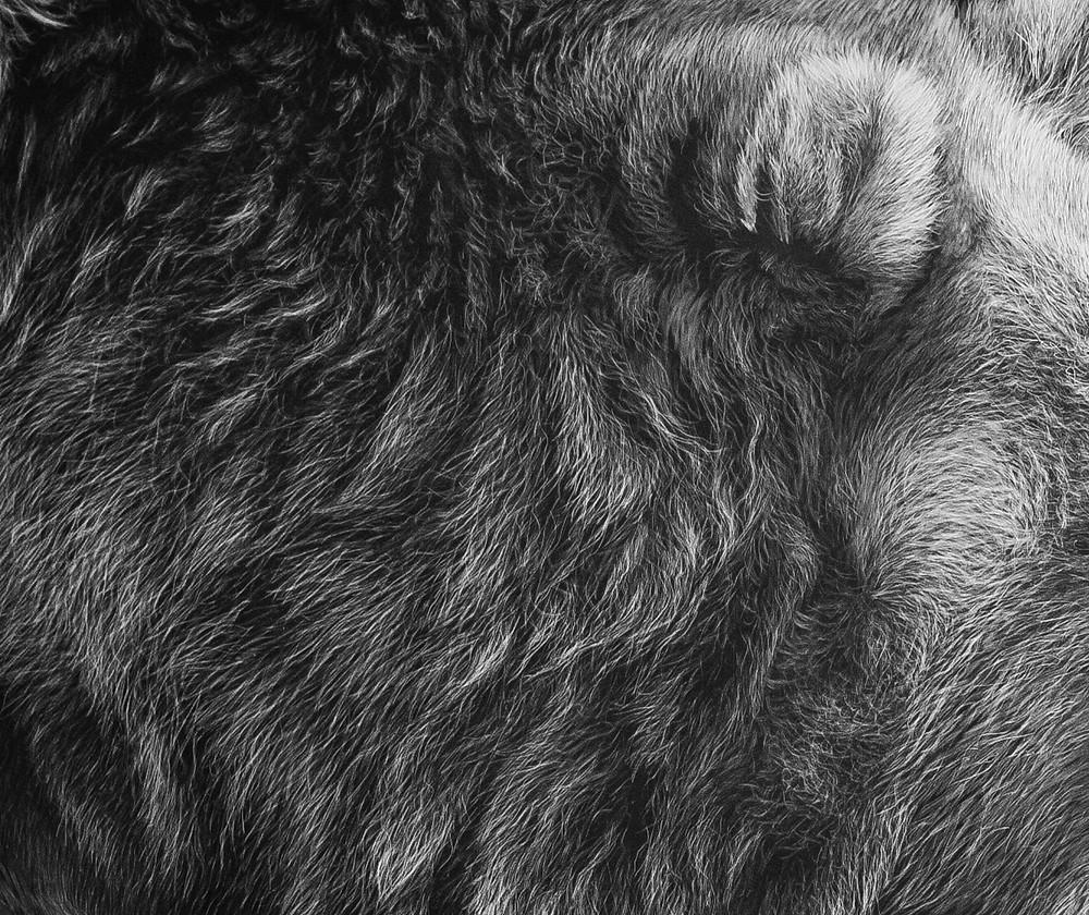 scratchboard fur details