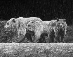 Bears, Brown (wm)