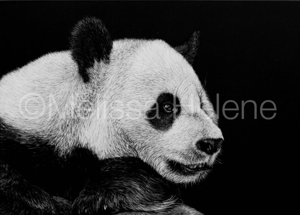 Giant Panda 2 (wm)