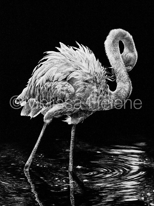 Flamingo | Reproduction