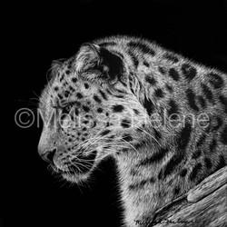 Jaguar 5 (wm)
