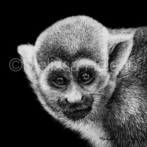"Squirrel Monkey | Original | 5""x5"""