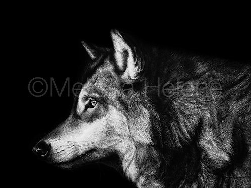 "Timberwolf | Original | 14""x18"""