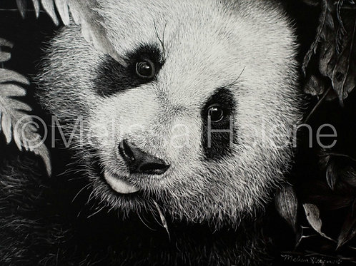 Giant Panda | Reproduction