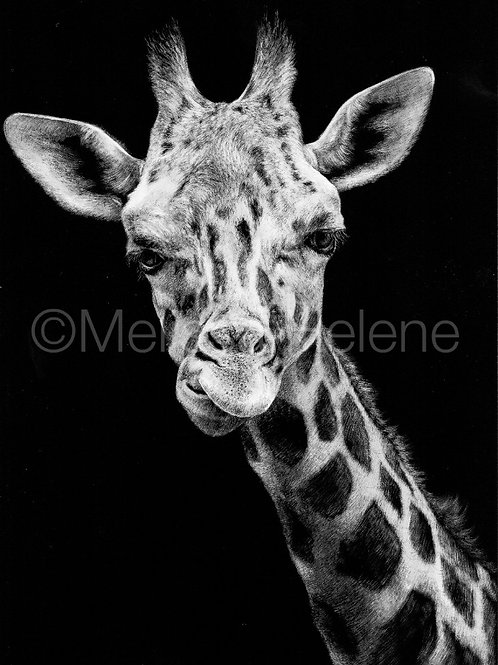 Giraffe | Reproduction