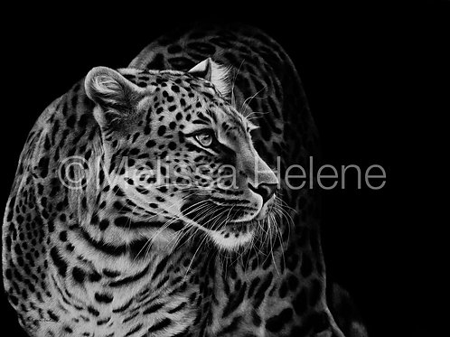 Leopard | Reproduction