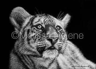 tiger scratchboard, scratchboard artwork, Melissa Helene Scratchboard