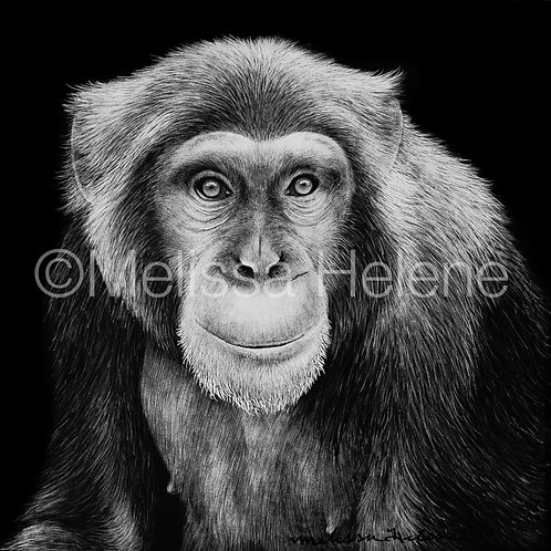 "Chimpanzee | Original | 4""x4"""