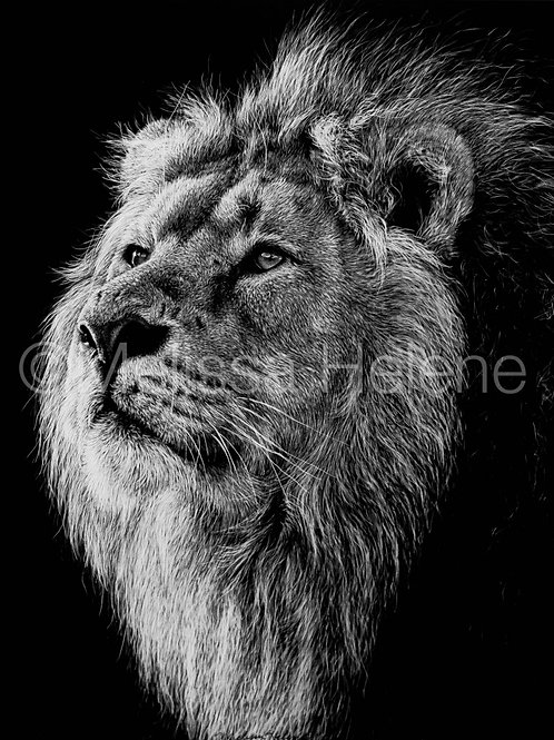 African Lion | Reproduction