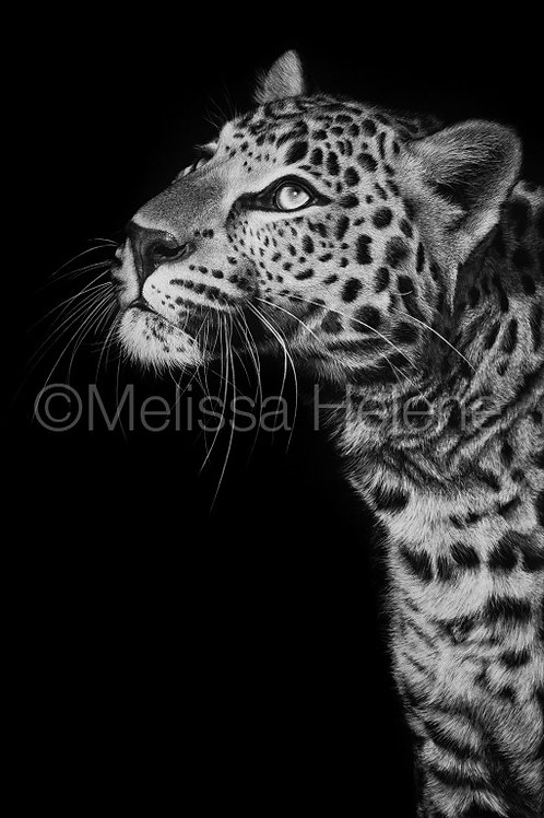 Leopard 02 | Reproduction