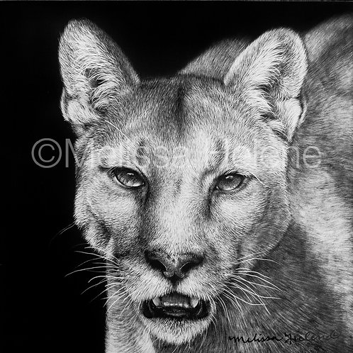 "Cougar | Original | 4""x4"""