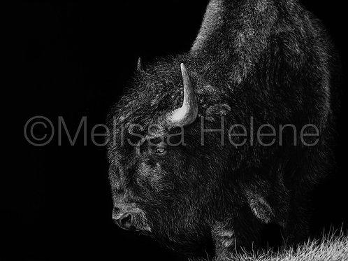 "American Bison | Original | 5""x7"""