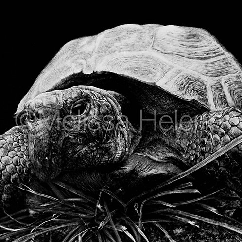 Turtle | Reproduction