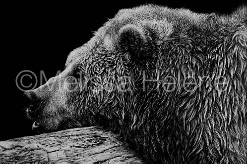 Grizzly Bear | Reproduction