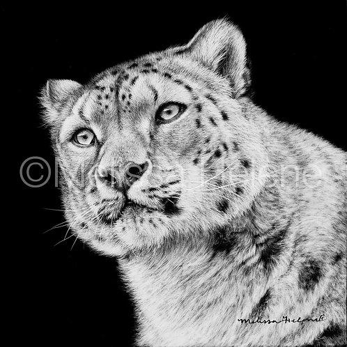 """Snow Leopard   Original   5""""x5"""""""
