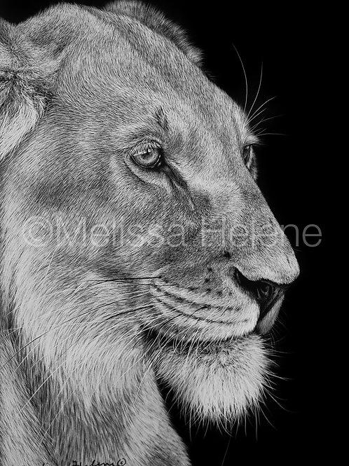"African Lioness | Original | 7""x5"""