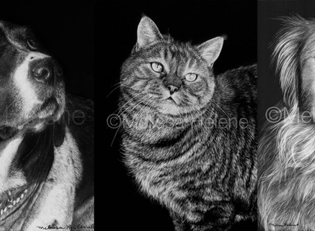 Why You Should Pick Scratchboard for Your Custom Pet Portrait