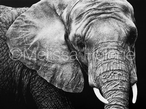 African Elephant | Reproduction